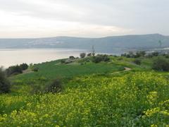 ガリラヤ湖の花